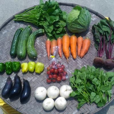 市場にはほとんど流通しない在来種と固定種限定の野菜セットのお届けです。