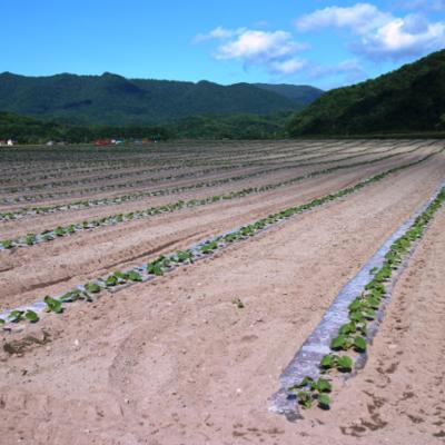 【farmO版・農業お役立ち情報】省力化の時代 -種苗編-
