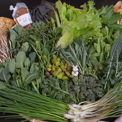 春の野菜!